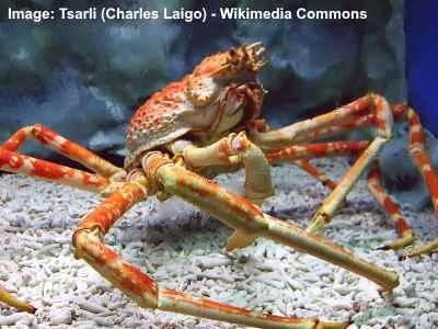 care este vederea unui crab cât costă restabilirea completă a vederii