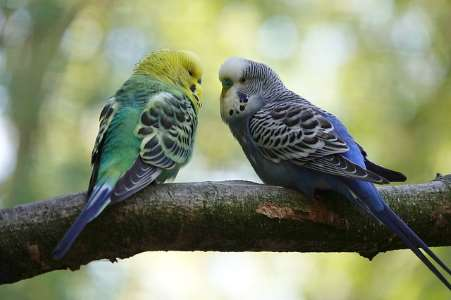 Types Of Pet Birds With Their Name Picture And Species