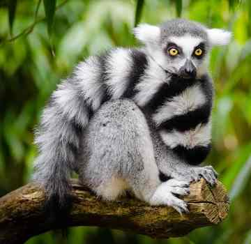 Tropical Rainforest Animals and Plants with Pictures and Names